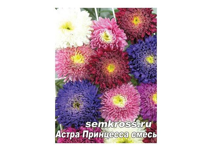 Домашний цветок декабрист как ухаживать в домашних условиях